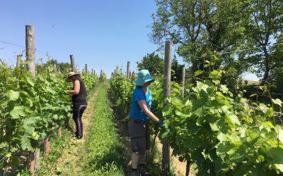 Ontmoet Cisca van Hegyem Winery